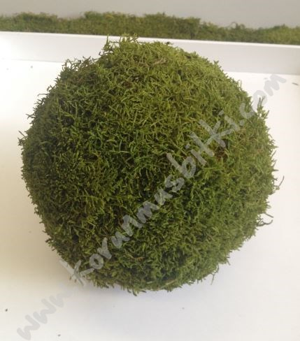 Decorative Moss Balls Inspiration Decorative Items Preserved Moss Ball Stabilised Moss Ball 48 Q