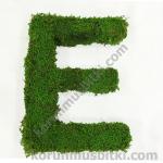 Preserved Moss Letter e