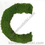 Preserved Moss Letter c