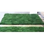 korunmuş kara yosunu panel