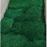 korunmuş kara yosunu yeşil