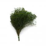 korunmuş broom fleuri yeşil