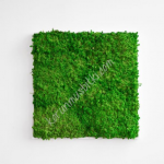 preserved carni moss 001
