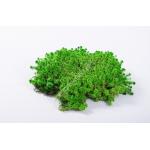 preserved carni moss