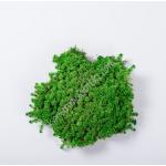 preserved carni moss 002