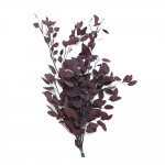korunmuş populus bordo bitki