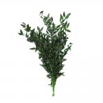 korunmuş ruscus yeşil bitki