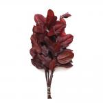 korunmuş salal bordo bitki