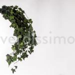 korunmuş hedera feuilles vert bitki