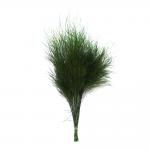 korunmuş tiki fern yeşil bitki