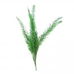 korunmuş fox tail meyeri yeşil bitki