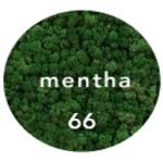 Preserved Lichen Moss Mentha Green