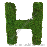 Preserved Moss Letter H