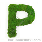 Preserved Moss Letter P