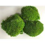 korunmuş top yosun -  top yosun