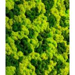 liken yosun panel
