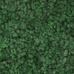 liken ren geyiği yosunu moss green yeşil