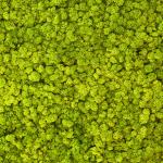 liken ren geyiği yosunu spring green yeşil