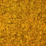liken ren geyiği yosunu yellow