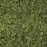 liken ren geyiği yosunu old green yeşil