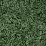 liken ren geyiği yosunu mint 66 yeşil