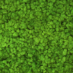 liken ren geyiği yosunu grass green yeşil