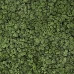 liken ren geyiği yosunu medium green yeşil