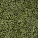 liken ren geyiği yosunu olive yeşil
