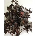preserved hedera burgundy