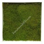 stabilized moss panel 50*50