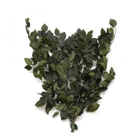 korunmuş bitki fagus yeşil