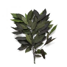 korunmuş bitki castanea yeşil