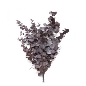 korunmuş okaliptus cinneria bordo