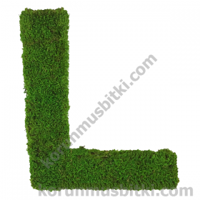 Preserved Moss Letter L