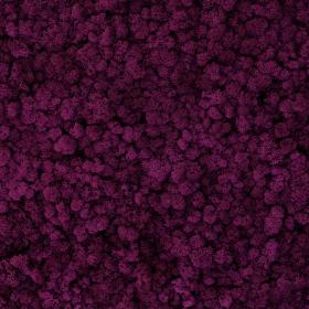 liken ren geyiği yosunu erica mor