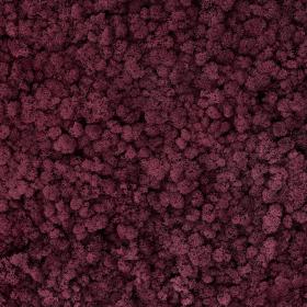 liken ren geyiği yosunu burgunder 63 mor
