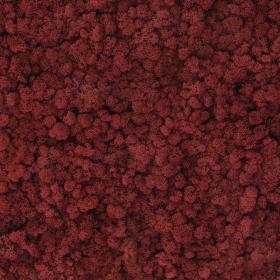 liken ren geyiği yosunu carmin red kırmızı