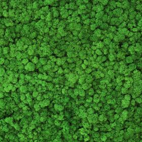liken ren geyiği yosunu light grass green yeşil