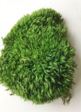 korunmus tavsan yosunu açık yeşil