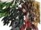 korunmuş okaliptus dalları