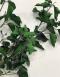 preserved hedera